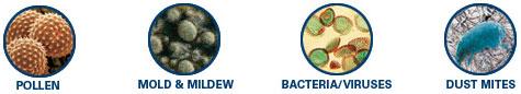 pollen mold bactdust