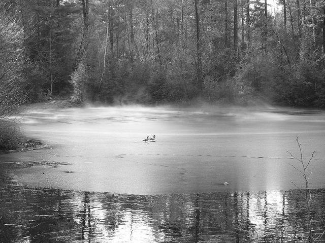800px-macdougal_pond