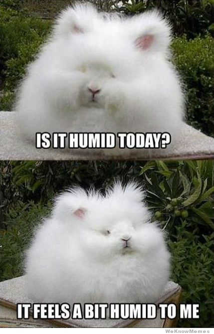 is-it-humid-today.jpg