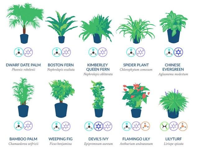 best-air-filtering-houseplants-nasa-3